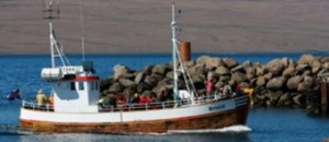 Sealwatching Boat Tours